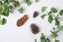 Pine Cones with Branches Flat Lay Top View. 3 Pine Cones with Branches Flat Lay Top View Royalty Free Stock Photo