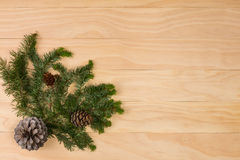 Pine cones and branches royalty free stock photo