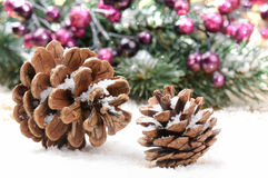 Pine cones in Christmas setting Stock Photos
