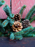 Pine cones and Christmas tree branch. Christmas tree branches with pine cones against a red wood background Stock Images