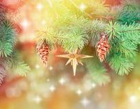 Pine cones on Christmas tree Stock Image