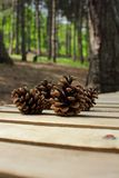 Pine cones collected in the park Stock Photos