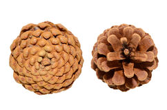 Pine cones. Pine cone isolated on white background Stock Photo