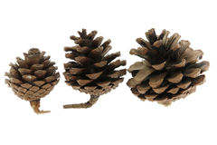 Pine cones. 3 pine cone in the light box Stock Image
