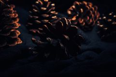 Pine cones on a dark background illuminated Royalty Free Stock Photos