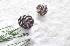 Pine cones decoration stain on snow background Royalty Free Stock Photo