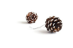Pine cones decoration stain snow on white background Royalty Free Stock Photos