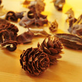 Pine cones and dried flowers and leaves Royalty Free Stock Image