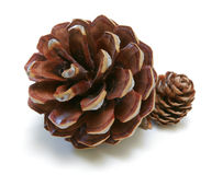 Pine Cones Duo Stock Photo