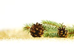Pine cones and fir branch Stock Image