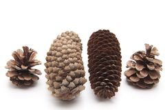 Pine cones and fir cones Royalty Free Stock Image