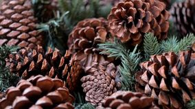 Pine cones and fir tree stock footage