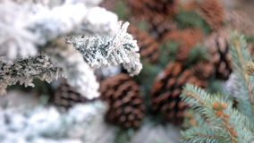 Pine cones and fir tree stock video footage