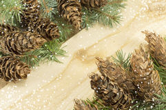 Pine cones and fir tree on wood Royalty Free Stock Photo