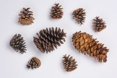 Pine Cones Flat Lay Top View White Background Close Up. Some Pine Cones Flat Lay Top View White Background Close Up Royalty Free Stock Photography