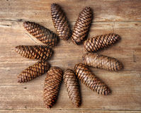 Pine cones flower shape Stock Image