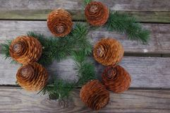 Big pine cones royalty free stock images