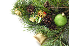 Pine with cones Stock Photos