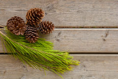 Pine cones and green branch on wood board Royalty Free Stock Photos