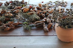 Pine cones. Green and dried pine cones on the table Stock Images