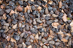 Pine cones on ground background Stock Photos