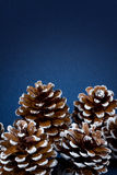 Pine cones group Stock Images