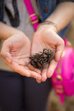 Pine cones in hands of a young girl.  Woman with a pink bag holding pine cones in her hands. Stock Photo