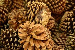 Pine cones for home Stock Photos