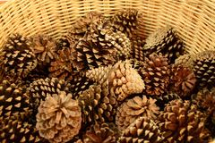 Pine cones for home Royalty Free Stock Photo