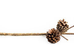 Pine-cones isolate on white Stock Images