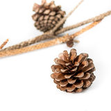 Pine-cones isolate on white Royalty Free Stock Photography