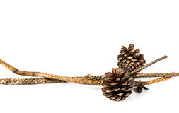 Pine-cones isolate on white Royalty Free Stock Photos