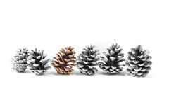 Pine cones isolated Royalty Free Stock Image