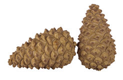 Pine cones isolated Royalty Free Stock Photos