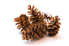Pine cones, isolated. A few pine cones isolated on white background Royalty Free Stock Images