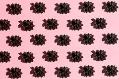Pine cones isolated on a pink background royalty free stock photography