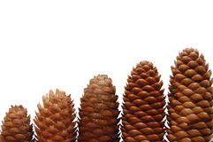 Pine cones isolated on white background Stock Photos