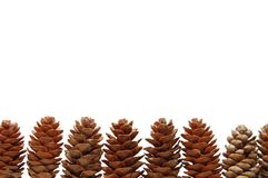 Pine cones isolated on white background Stock Photography