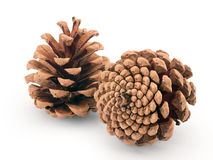 Pine cones isolated Royalty Free Stock Photography