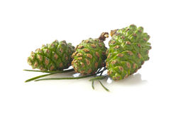 Pine cones isolated on white background Royalty Free Stock Images