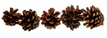 Pine cones isolated on white background Royalty Free Stock Image