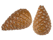 Pine cones isolated on white Royalty Free Stock Photography