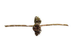 Pine cones isolated on  white background with clipping path Royalty Free Stock Image