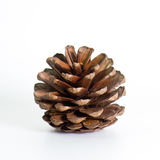 Pine cones isolated on white background stock photo