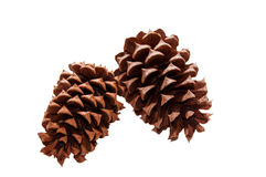 Pine Cones - Isolated on White Background. Natural brown pinecones from evergreen tree. Set of two pine cones for decoration. Two brown pinecones from an Stock Images