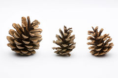 Pine cones isolated on white Royalty Free Stock Image