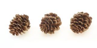 Pine cones of larches Stock Photo