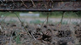 Pine cones lie on the ground under the old fence. The action in slow motion stock video