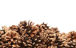 The Pine cones Stock Photos