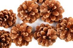 Pine cones are located whole background. Royalty Free Stock Image